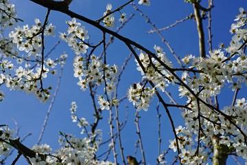 Blauer Frühlingshimmel