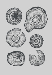Pine cones study ink illustration