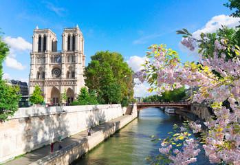 Notre Dame cathedral, Paris France Fototapete