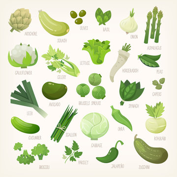 Variety of green and white common farm and exotic fruit and vegetables. List of plants from grocery store with their market names. Isolated vector icons.