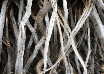 Interesting looking dried out by the salt and sea palm tree roots at the beach, abstract background.