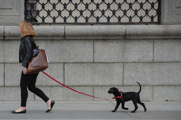 A woman walks her puppy near the White House in Washington