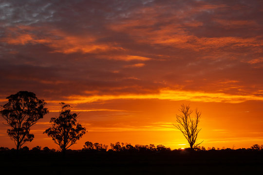 once in a life time sunset in Australia with sillhouettes of trees, Cobram, Victoria, Australia