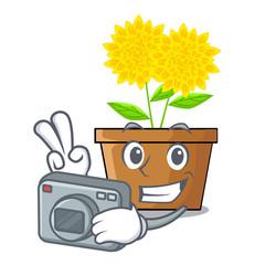 Photographer dahlia flower in the mascot stem