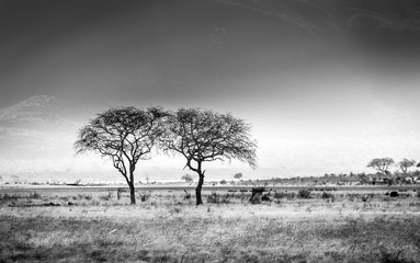 African savannah plains scenery