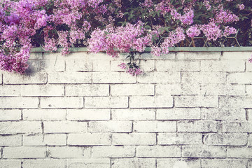 Printed kitchen splashbacks Lilac Branches of blossoming lilacs over a brick fence