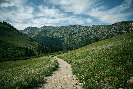 Wasatch Mountain Range, Alta, Utah