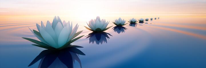 Lotusblüten im Sonnenuntergang Fototapete