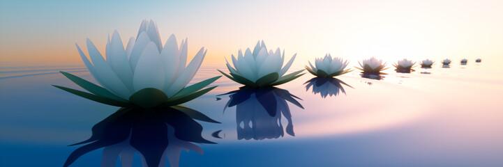 Wall Mural - Lotusblüten im Sonnenuntergang 2