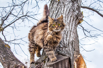 A young striped cat climbing a tree_