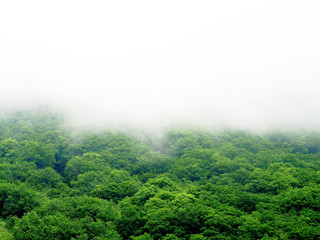 Fog covered mountains, rainforest landscape. Green forest in the fog, top view