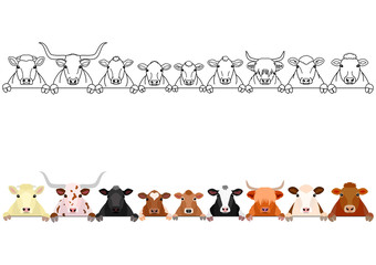 various cattle heads in a row