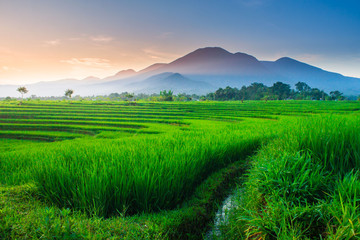 Natural portraits of rice fields and mountains in Indonesian rural areas with sunrise and green morning dew in Asia natural beauty of bengkulu utara indonesia with mountain barisan and green nature
