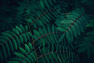 Foliage of tropical leaf in dark green with rain water drop on texture, abstract pattern nature...