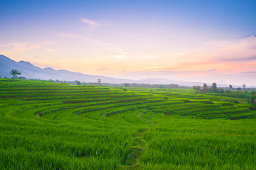 morning light sunrise at paddy fields in mountain range natural beauty of bengkulu utara indonesia with mountain barisan and green nature