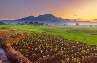 morning color sunrise at fields with mountain range natural beauty of bengkulu utara indonesia with mountain barisan and green nature