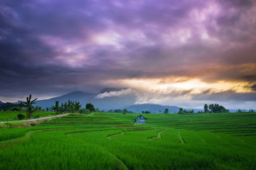 amazing morning sky with green fields asia natural beauty of bengkulu utara indonesia with mountain barisan and green nature