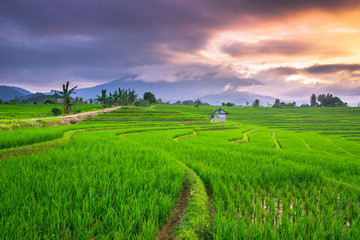 beauty nature paddy fields in the morning natural beauty of bengkulu utara indonesia with mountain barisan and green nature