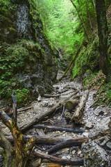 Fotobehang Onweer Canyon of creek Sucha Biela. Slovak Paradise. Slovakia. Europe.