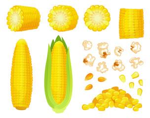 Fototapeta Cartoon corn. Golden maize harvest, popcorn corny grains and sweet corn. Ear of corn, delicious vegetables vector illustration set obraz