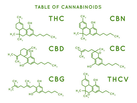 Cannabinoid structure. Cannabidiol molecular structures, THC and CBD formula. Marijuana or cannabis molecules vector illustration