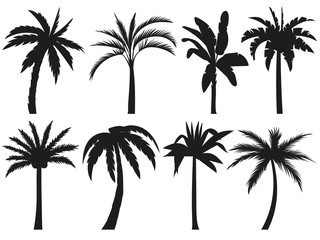 Palm trees silhouettes. Tropical leaves, retro palms tree and vintage silhouettes vector illustration set