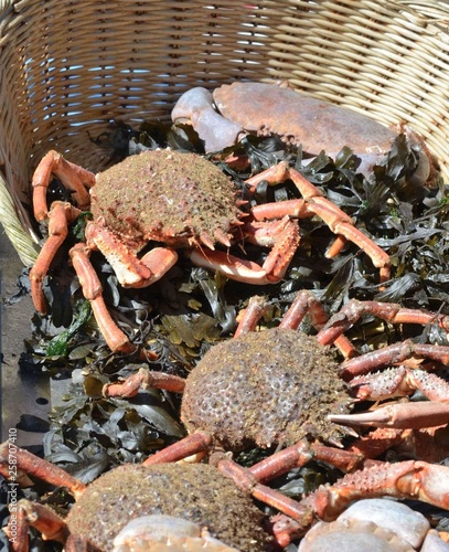 Crabs and Sea spider crab for sale at a french market