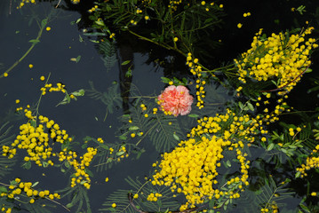 flwers floating on water