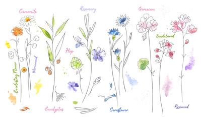 Obraz Wildflowers hand drawn watercolor illustration set. Plants vector sketch. - fototapety do salonu