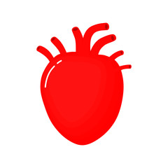 Human heart anatomy icon. flat cartoon style. bright and cute. Isolated on white background. vector illustration.