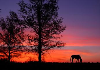 Grazing At Sunrise
