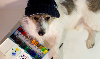 dog artist in a hat