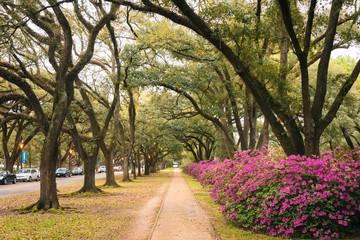 Azaleas and trees along a path at Rice University, Houston, Texas