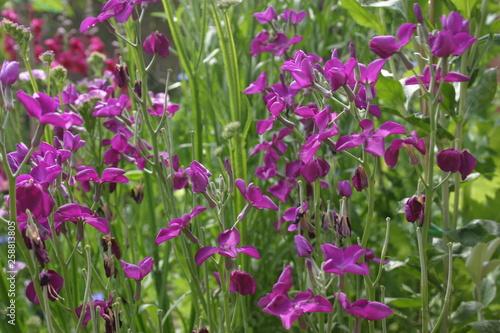 Jardin fleuri\