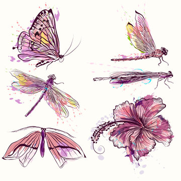 Collection of vector watercolor spring butterflies and dragonflies
