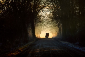 Amish Buggy in Tree Tunnel
