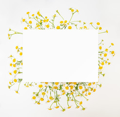 Foto op Canvas Madeliefjes Chamomile daisy floral background