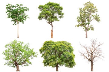 Collection of isolated tree on white background Wall mural
