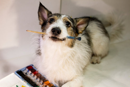 dog with a paint brush in his teeth