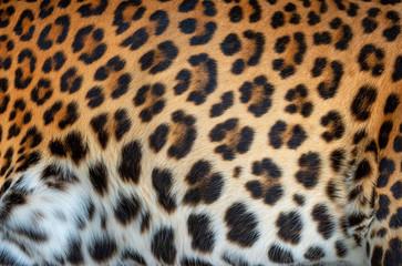 Wall Mural - Leopard real fur texture