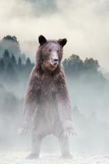 Wall Mural - Brown bear in the misty fog
