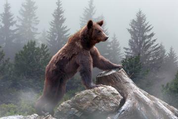 Brown bear in the misty fog Fototapete
