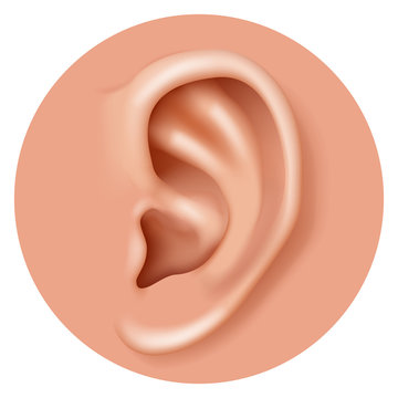 Closeup ear organ hearing human health care realistic 3d icon design vector illustration