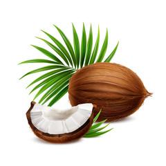 Coconut Realistic Image