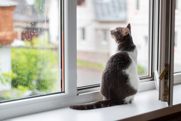 Cat sits on the windowsill near an open window, for which goes rain