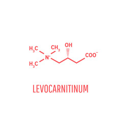 Levocarnitine biological molecule. Acetylcarnitine biological molecule