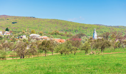 mountainous countryside in springtime. wonderful sunny weather. orchard on the outskirt of the village