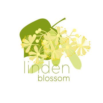 Linden blossom flat color vector illustration