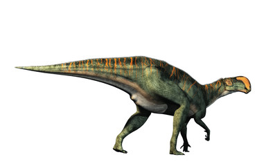 An Altirhinus on a white background.  Altirhinus (high snout) was a type of iguanodon dinosaur of the early Cretaceous period in Mongolia. 3D Rendering