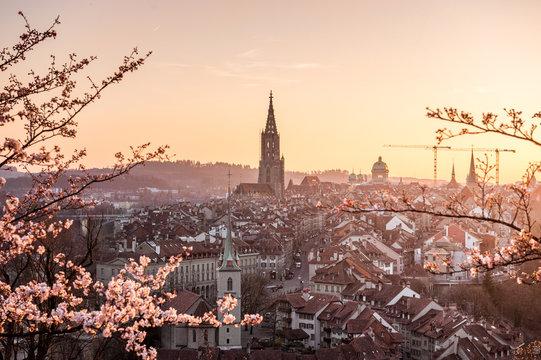 Sonnenuntergang während Kirschblüte in Bern mit Berner Münster und Altstadt